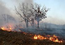 В южноуральских лесах вводят особый режим