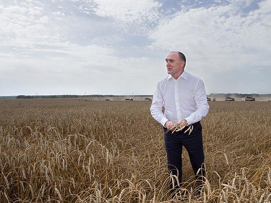 Уборочная вразгаре. НаЮжном Урале собрали неменее млн тонн зерна