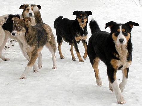ВЧелябинске работники «ГорЭкоЦентра» расстреляли бродячих собак