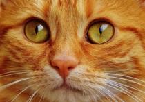 Сосиски оказались неэффективны: как в Подмосковье спасали кота из колодца