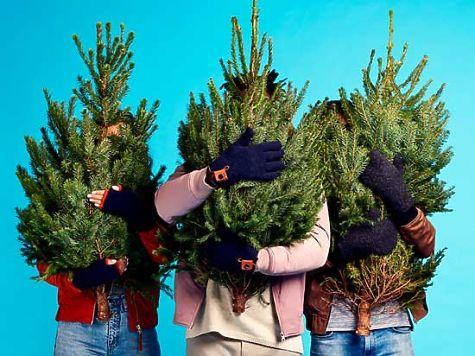 ВСамаре запустят такси для новогодних елок