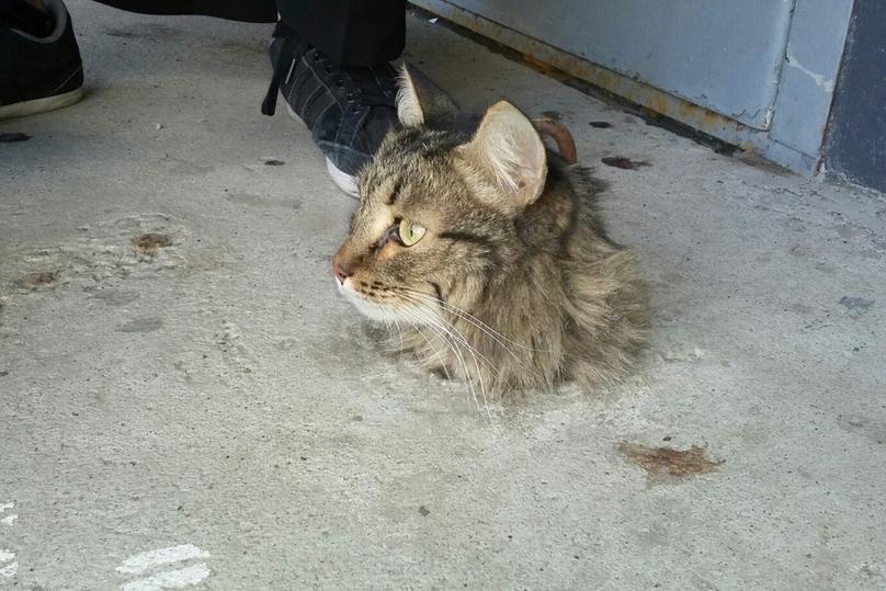В новгороде спасли кота
