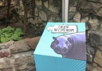 Бегемот в зоопарке учит русский язык и привыкает к русской морковке