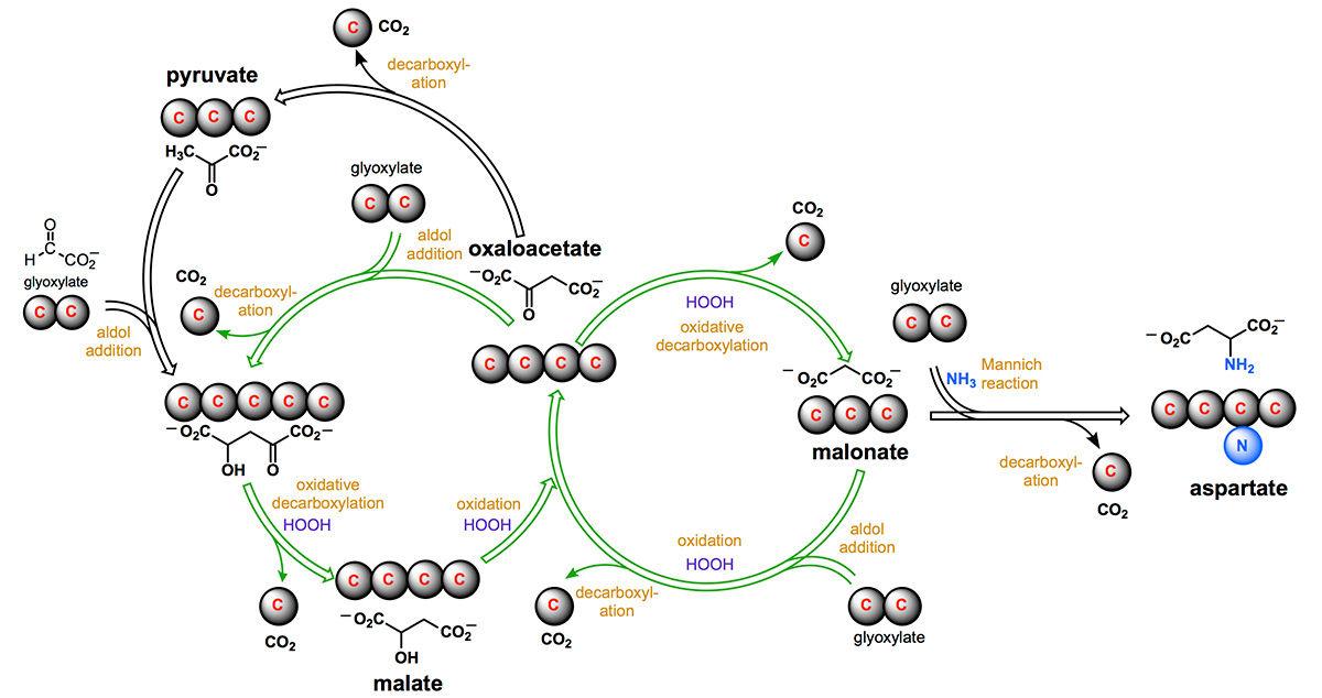 Ученые доказали факт появления клеток изнеживых компонентов